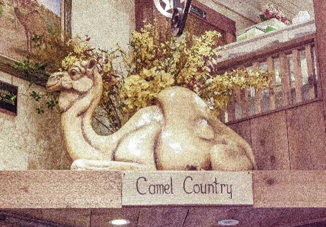 camel-fotor